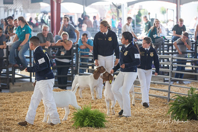 2019 OC FAIR MASTER SHOWMANSHIP