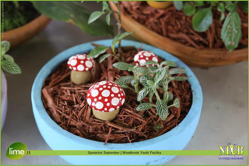 Shroom Blooms