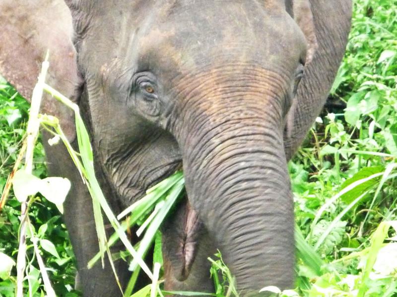 b elephant3.JPG