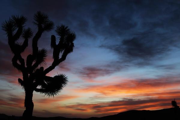 California Desert 2010