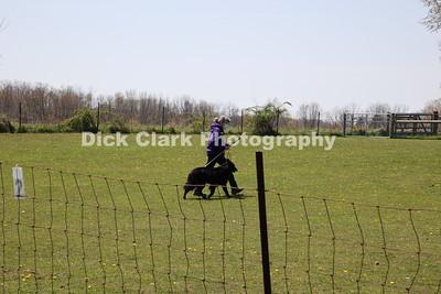 Monday Herding Trial 2 PT