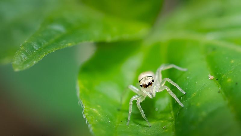 _DSC4251-White Arachnida.jpg