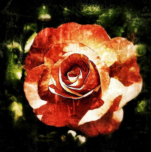 Paper Rose 2