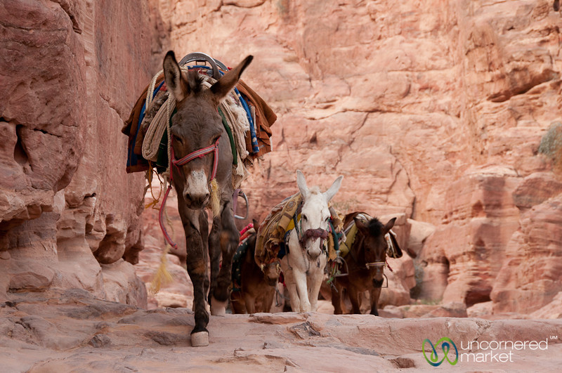 Donkey Trail Down from the Monastery - Petra, Jordan