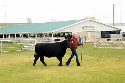 Breeding Heifers Championship Drive
