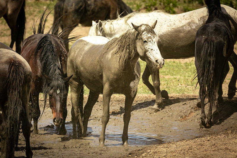 horse 14.jpg