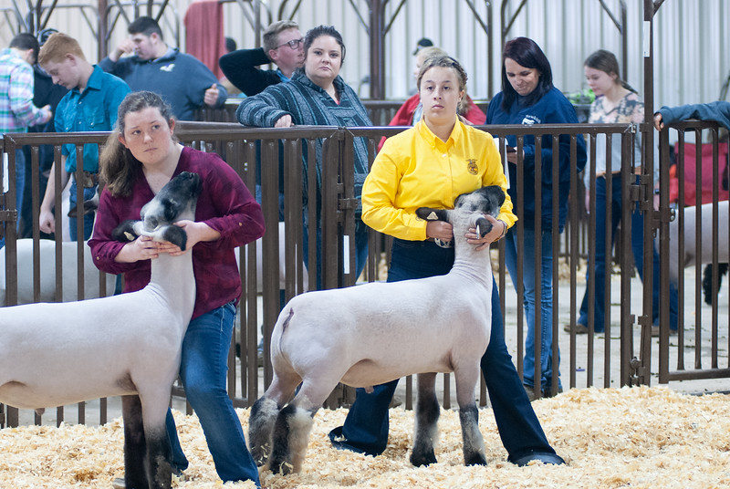 kay_county_showdown_sheep_20191207-92.jpg