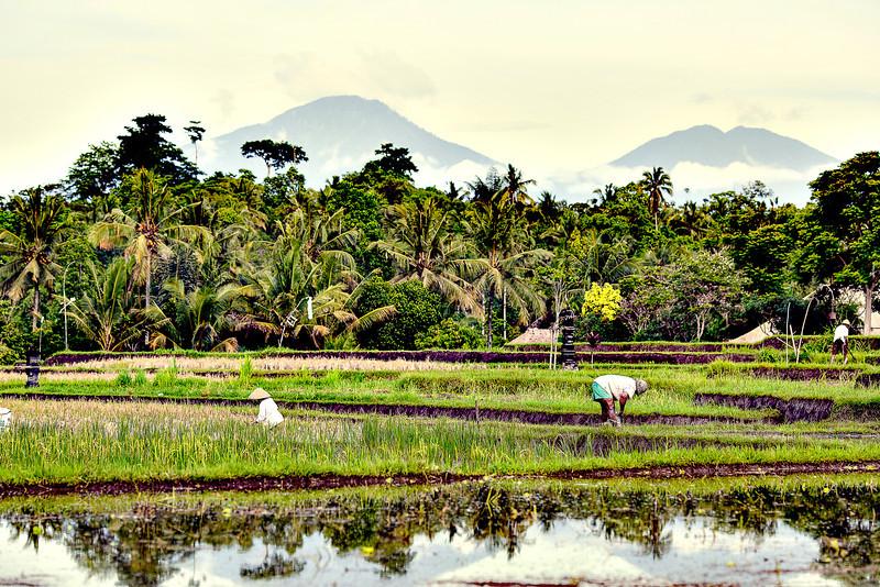 Bali-1-6.jpg