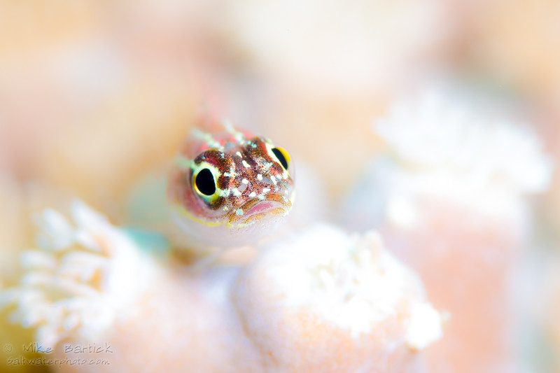 High key goby (1 of 1).jpg