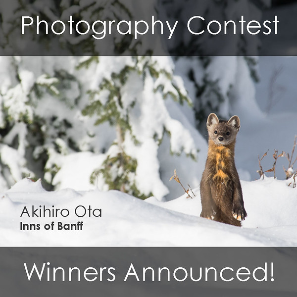 Feature Image - Photo Competition Winners.jpg