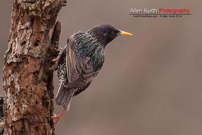 April 1 - Backyard Birds -