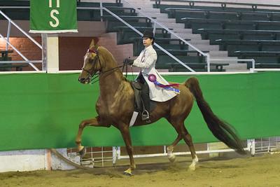 163 - Reg. American Saddlebred Country Pleasure English 18 & over Stake