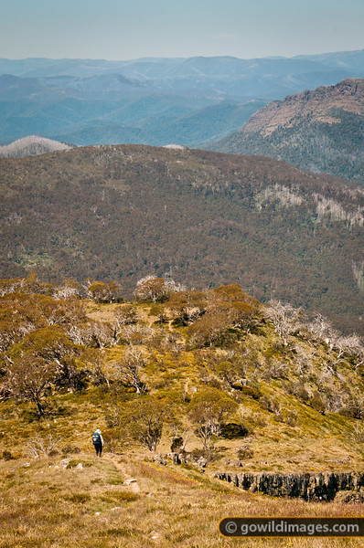 Lone hiker on the Australian Alps Walking Track (AAWT), descending Mt Speculation towards Camp Creek. The Viking sits to the right.