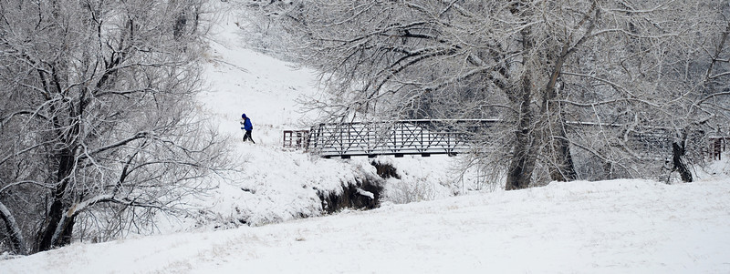 . Nelson Takayama goes cross country skiing at Belmar Park in Lakewood  after the area was hit with a few inches of snow overnight, January, 31 2014. A smaller storm will move back into the area later today. (Photo by RJ Sangosti/The Denver Post)