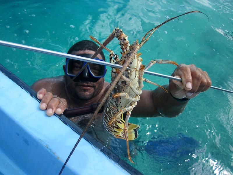 Spiny lobster (crawfish to Bahamians)