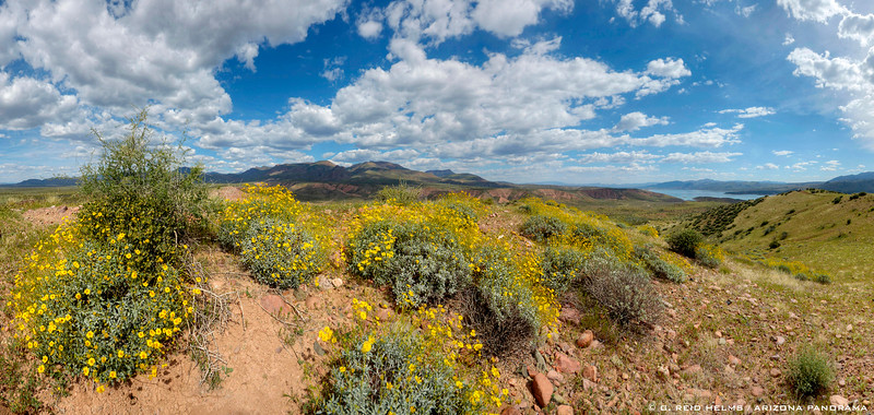 A-Cross Road Brittlebush Vista