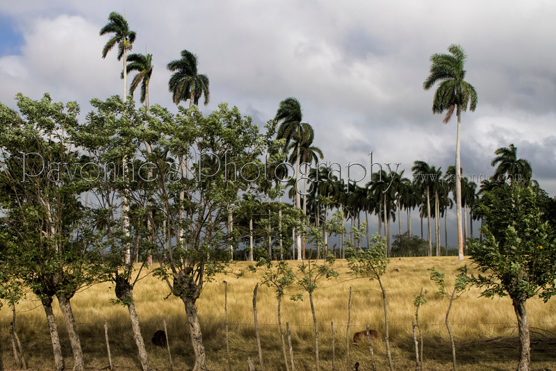 Cuba2 b 9552.jpg