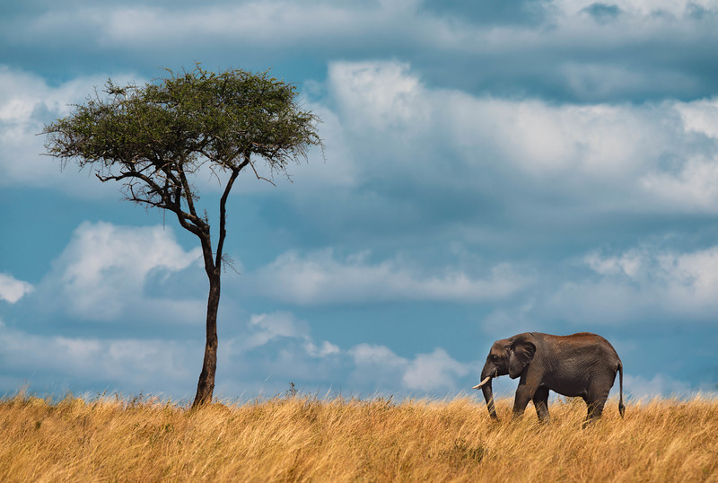 Tanzania-safari-4.jpg