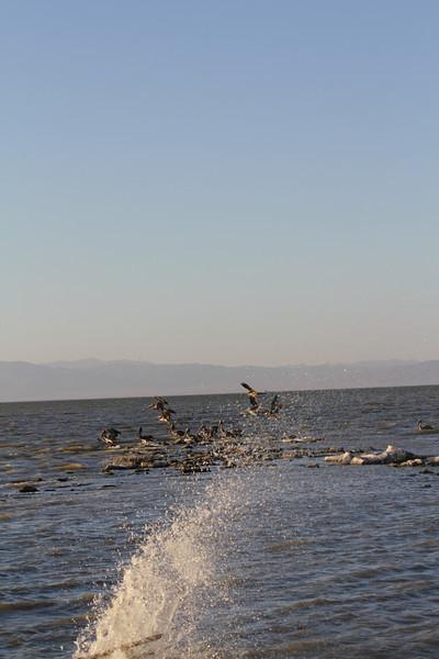 04 The Salton sea (57).JPG