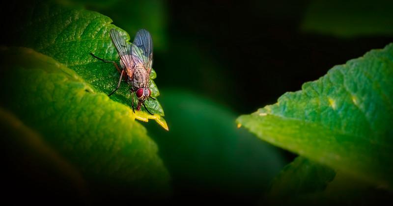 Bugs and Beetles - 178.jpg