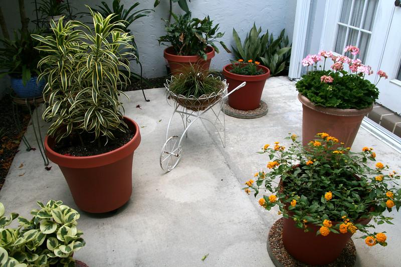 My Little Courtyard