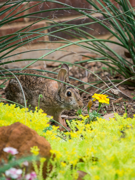 Bunnies and Lizards-4290656.jpg
