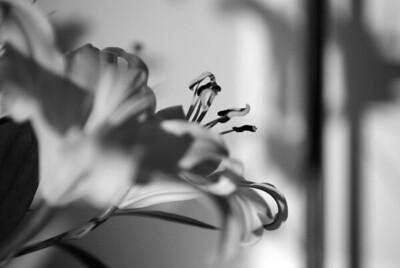 Flowers & Objects