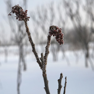 2017 01 Ottawa Winter