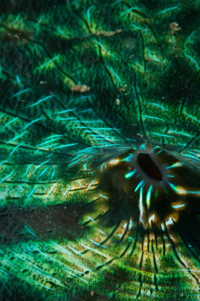 clam-4721.jpg