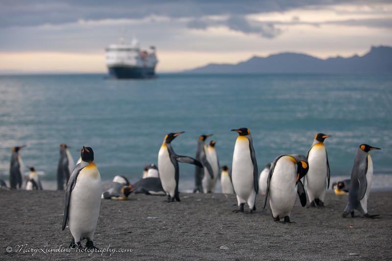 Antarctic-86