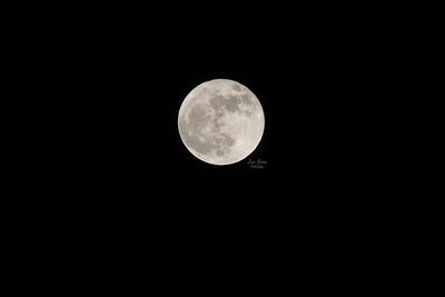 Rare Blue Hunter Halloween Moon