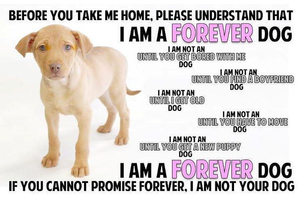 PETS_Adoption.jpg