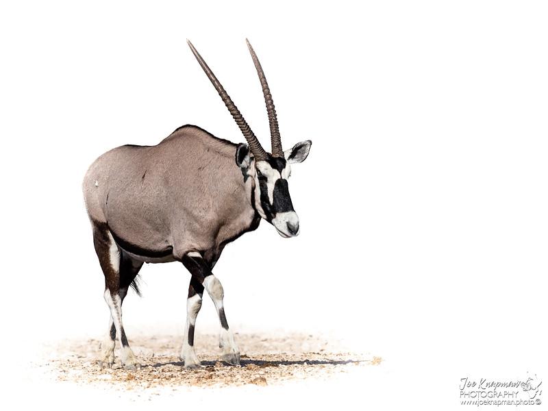 Oryx in Etosha