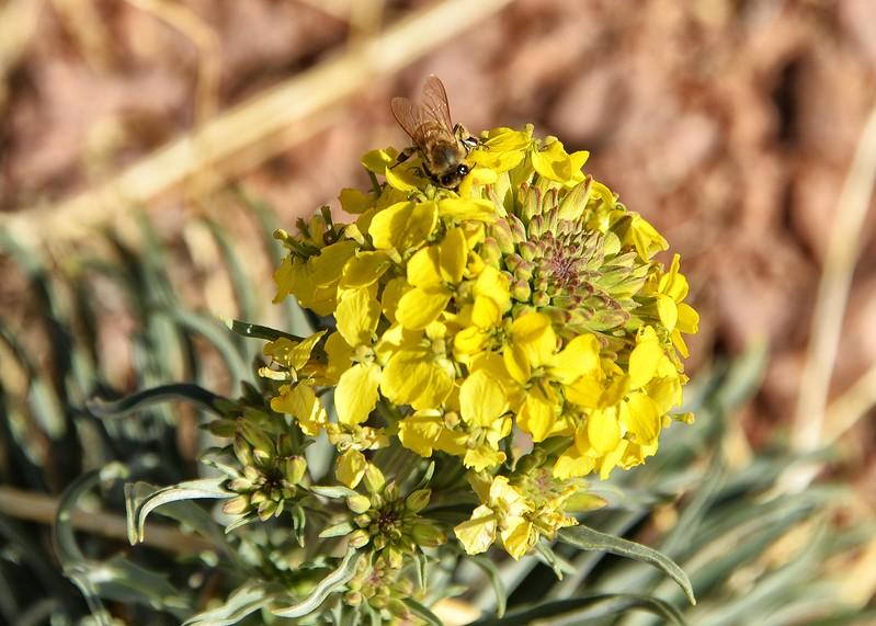 NEA_4777-7x5-Flower-Bee.jpg