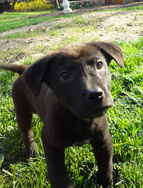 little puppy.jpg