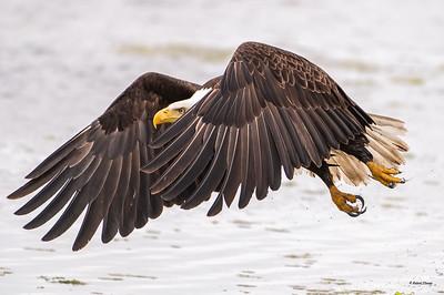 2021 Seabeck Eagles