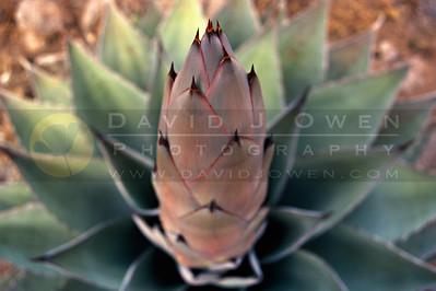 Texas - Plants