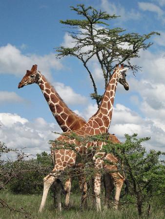 Kenya: Mt Kenya