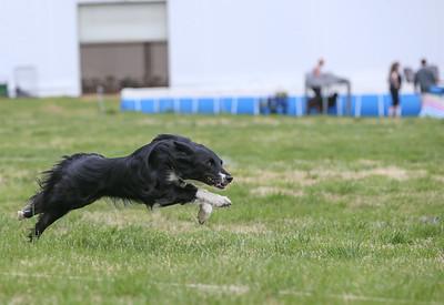 Lure Coursing @ Hog Dog - 4/15/17 (partial)