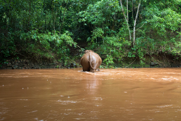 Saving the Forest, One Elephant at a Time