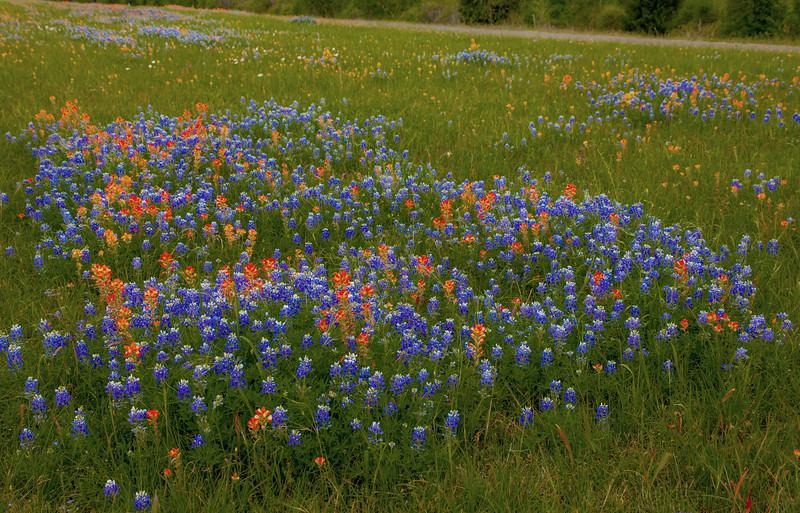 2016_4_9 Texas Wildflower Shoot-8602.jpg
