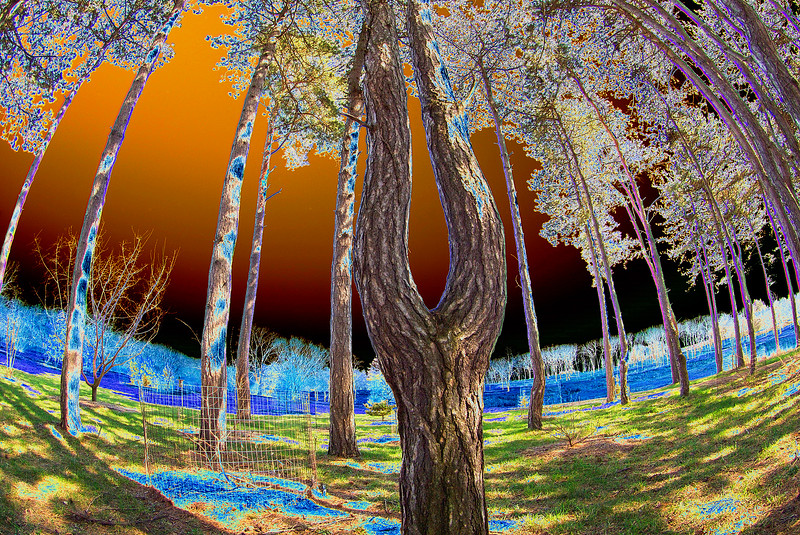 Tree of Life-1.jpg