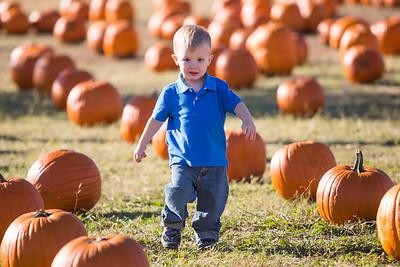 Josh Hawkins Pumpkin Patch