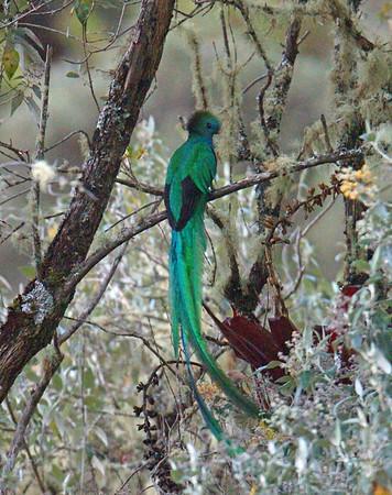 BIRDS  (23 species)