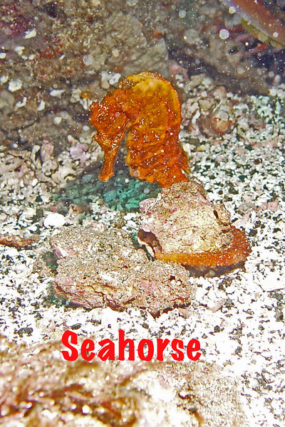 Seahorse 6.jpg