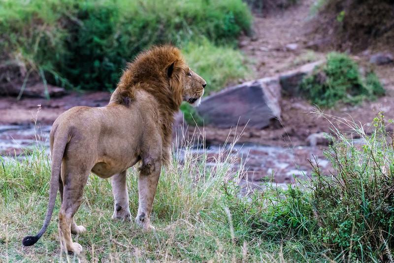 Kenya 2015-05035.jpg