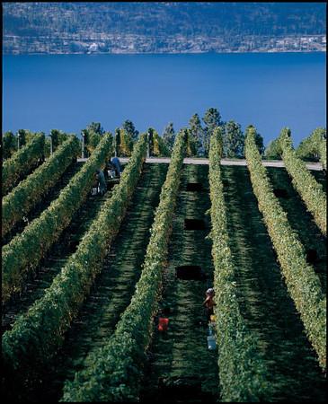 BC Wine Regions