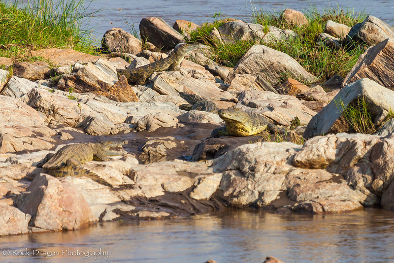 North_Serengeti-83.jpg