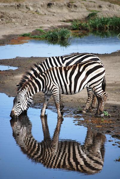 Ngorongoro (8).JPG