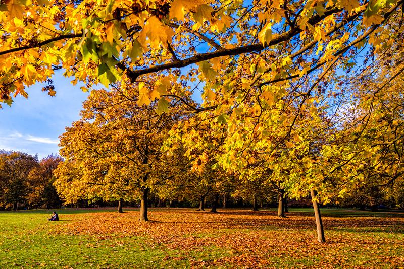 Hyde-Park-1.jpg